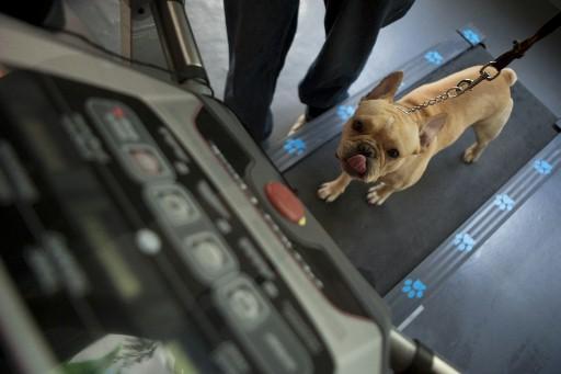 Buon Compleanno Fido Festeggiamenti Esagerati Per Dei Cani Foto