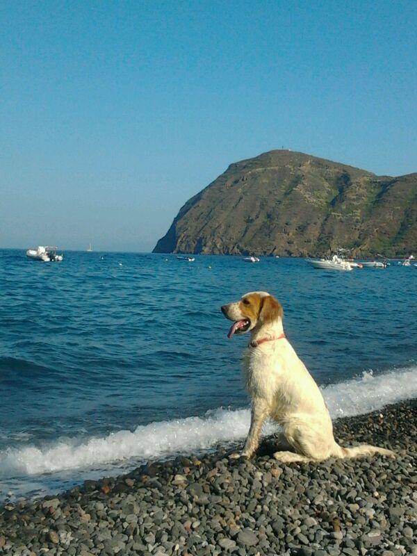 Il cane Gigi, abbandonato sulla spiaggia a Lipari, abbaia al mare aspettando il ritorno del padrone