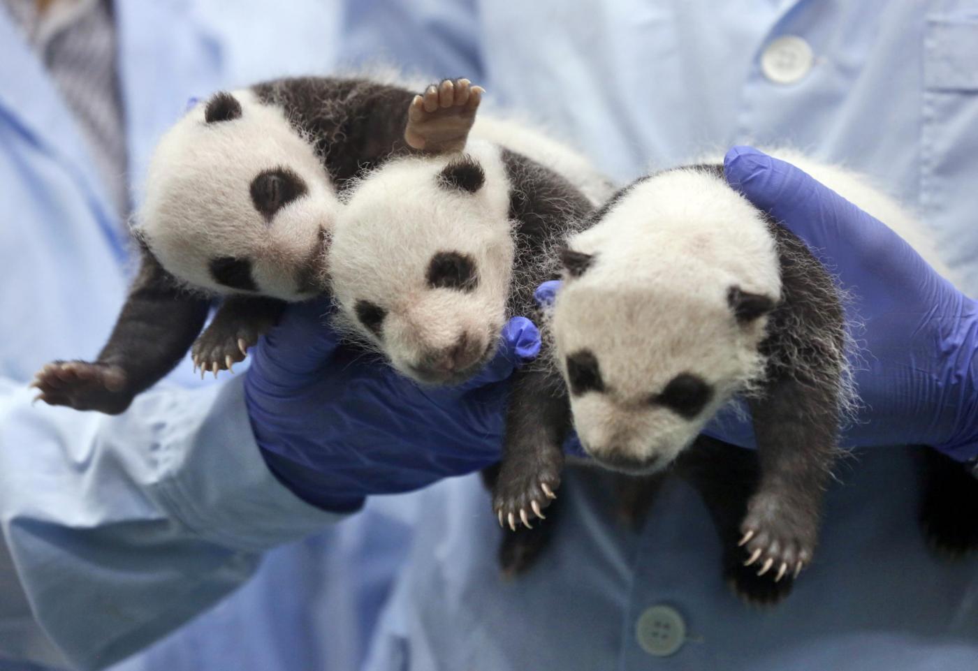 Giochi dei tre panda