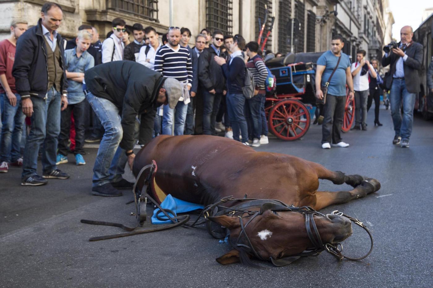 Cavallo sviene a pochi passi da palazzo chigi for Cavalli bolzano