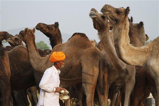 H F Cattle India Commercio e fol...