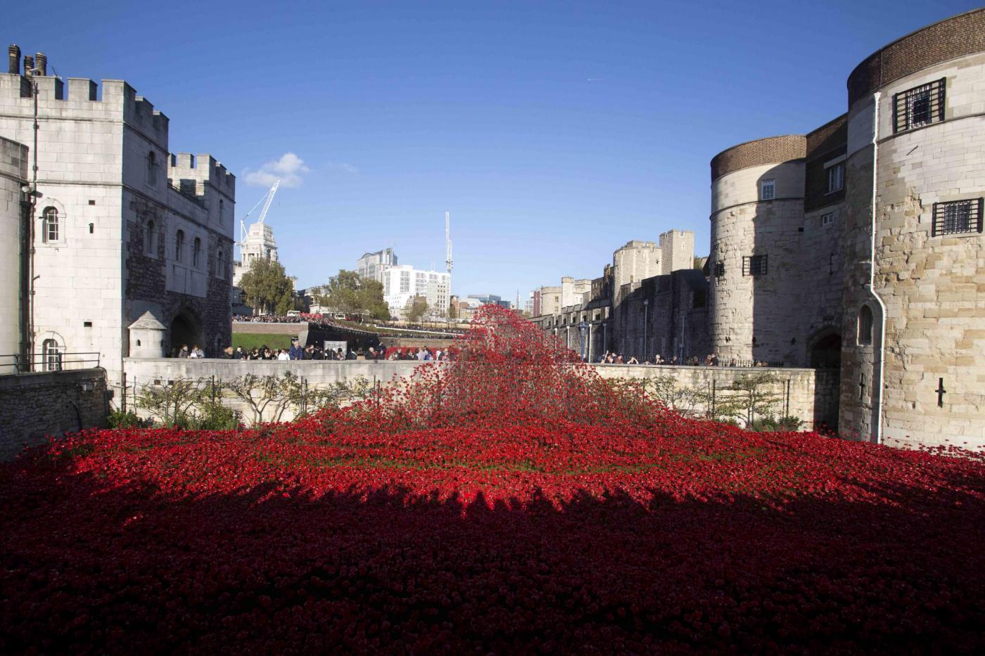 Lutto e papaveri rossi londra celebra il remembrance day - Papaveri e veterani giorno di papaveri e veterani ...