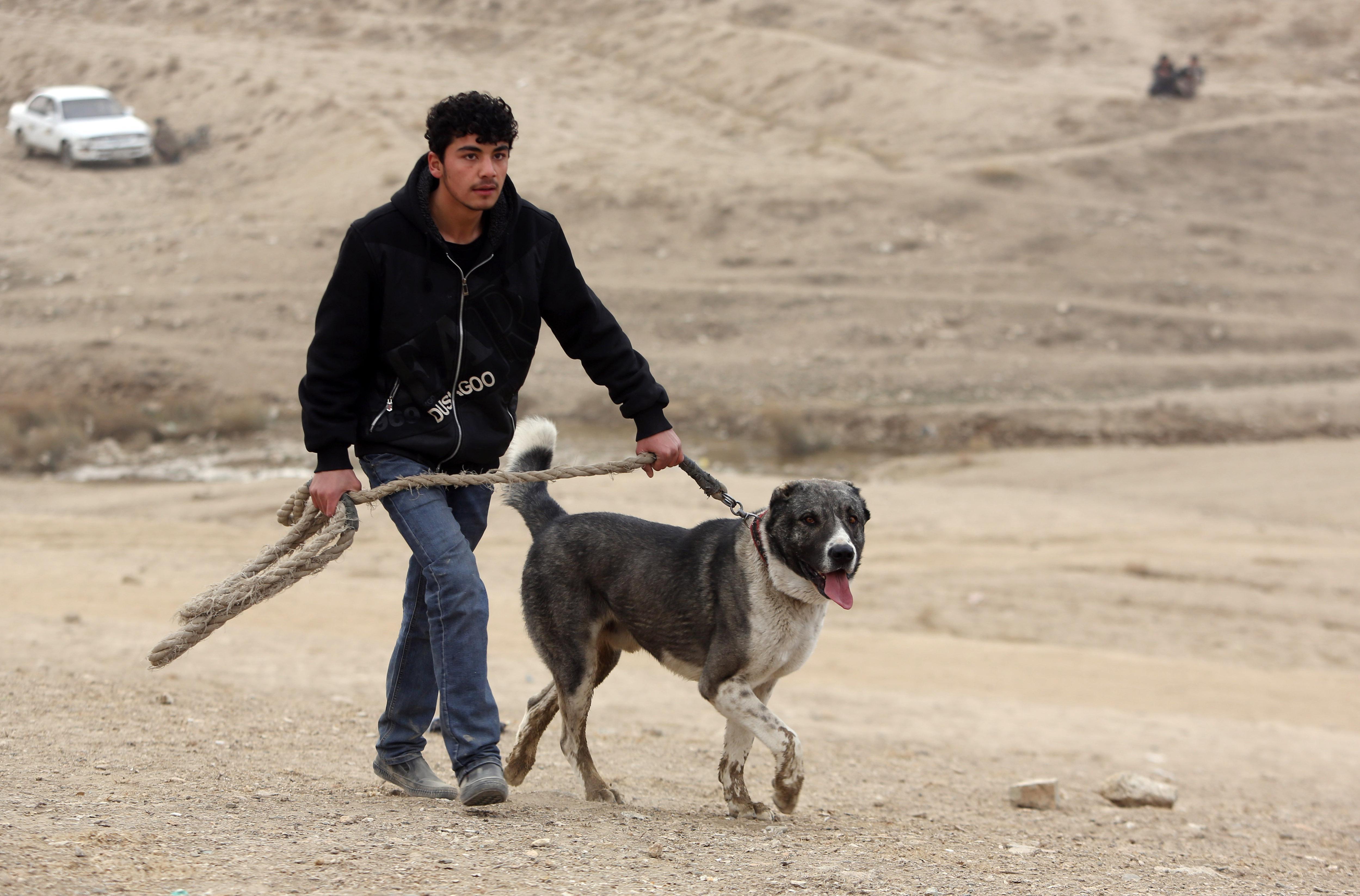 Immagini shock dall'Afghanistan, la moda crudele dei combattimenti tra cani